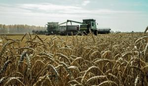 Хлебные просторы ООО Лузинское зерно