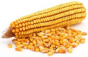 химики Т-2 кукуруза