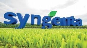 syngenta_field