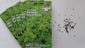 базилик_семена