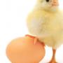 Осокинская птицефабрика ― признанный гарант высокого качества